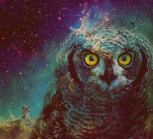 мудрость сова